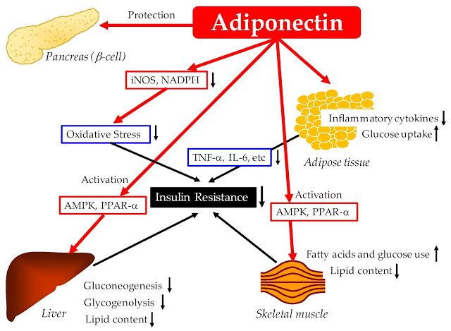 glucose and lipid metabolism