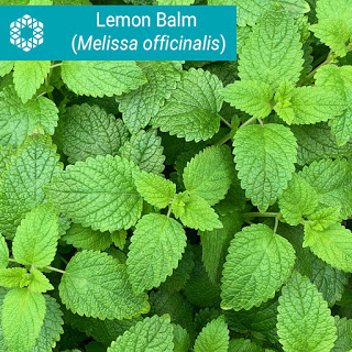 Lemon balm (Melissa officinalis) is a member of the mint family and has been shown in research to help alleviate stress, depression and anxiety scores, as well as sleep disturbances.