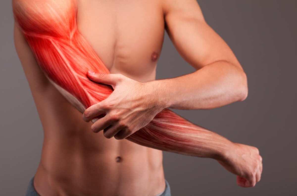 bigger-arms-anatomy